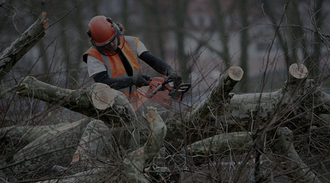 South Amboy Tree Service